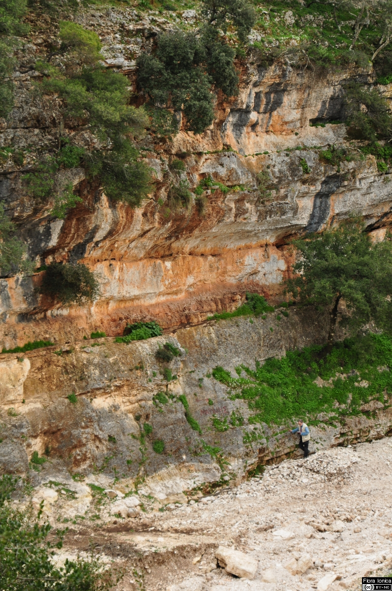Banked limestone cliff in small valley S of Agia Effimia, Cephalonia.